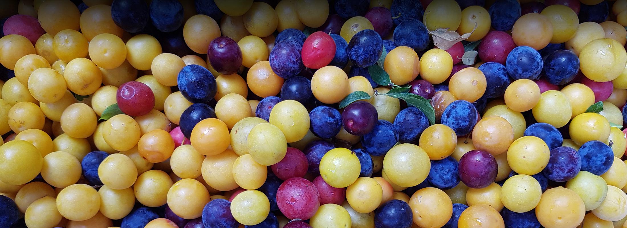 Frutta e Trasformati